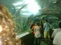 тоннель под аквариумом