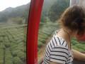 Профуникулёриваем над чайными плантациями