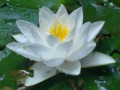 Цветы - всегда красивы