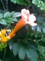 Красивы всегда цветы