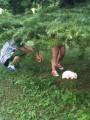 красноухий кролик на прогулке