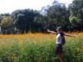 ромашковые оранжеполя