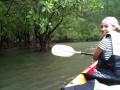 в мангровом лесу