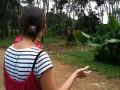 А вокруг слоны, слоны, слоны