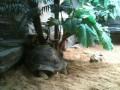 так, что аж черепахи прячутся