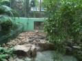 скучающие аллигаторы