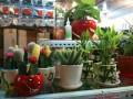 На вкус и цвет все кактусы разные