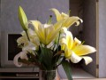 Лилии радуют