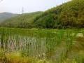 Моганшан - Голубое озеро