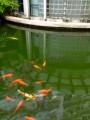 большая рыба и компания