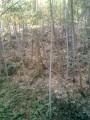 Бамбуковый лес, есть высотой с пятиэтажку