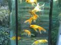 Каждой рыбке по желанию