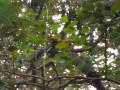 Шифу спит в ветвях